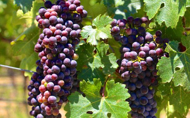 """""""Wino i kobiety wykoleją mądrych"""" (Syr 19,2)"""
